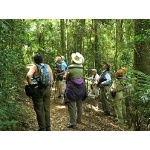 Rainforest birding in Lamington National Park. Photo by Rick Taylor. Copyright Borderland Tours. All rights reserved.