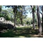 Great Plaza, Yaxchilan. Photo by Rick Taylor. Copyright Borderland Tours. All rights reserved.