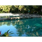 Our hotel swimming pool at Palenque. Photo by Rick Taylor. Copyright Borderland Tours. All rights reserved.