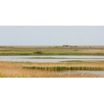 Cley Marshlands. Photo by Andy MacKay. All rights reserved.