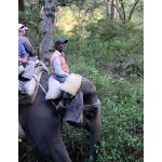 Elephant Approaches Sambar. Photo by Rick Taylor. Copyright Borderland Tours. All rights reserved.
