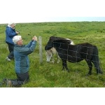 Photographing Shetland Ponies. Photo by Rick Taylor. Copyright Borderland Tours. All rights reserved.