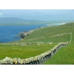 Rock-walled sheep paddock, Shetland Islands. Photo by Rick Taylor. Copyright Borderland Tours. All rights reserved.