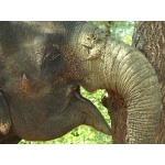 Very close Elephant in Yala National Park. Photo by Rick Taylor. Copyright Borderland Tours. All rights reserved.