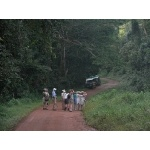 Birding the Busingiro Forest. Photo by Rick Taylor. Copyright Borderland Tours. All rights reserved.